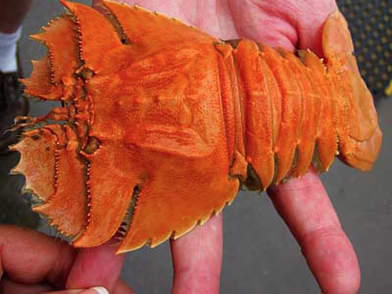 fishmarket-bugs
