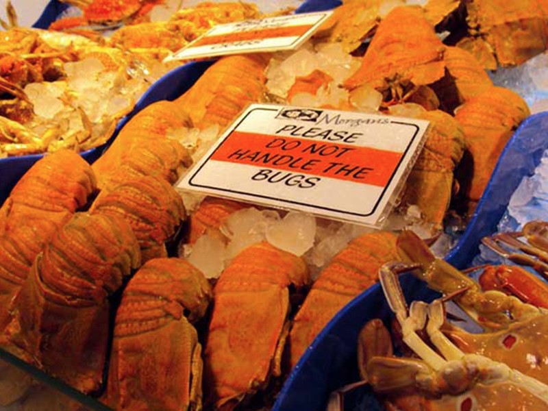 fishmarket-bugs3