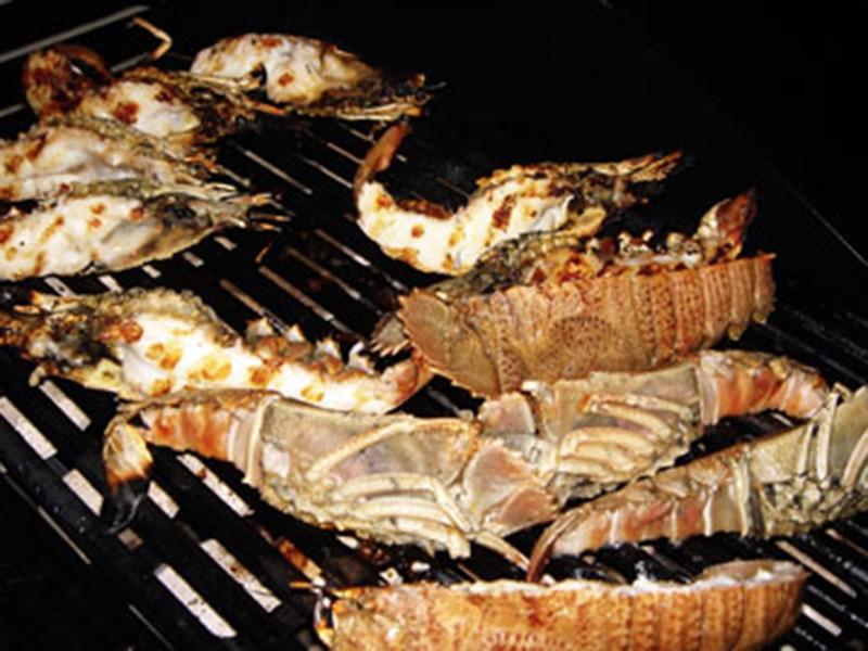 fishmarket-bugs4
