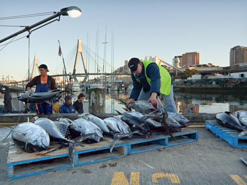 fishmarket-tuna