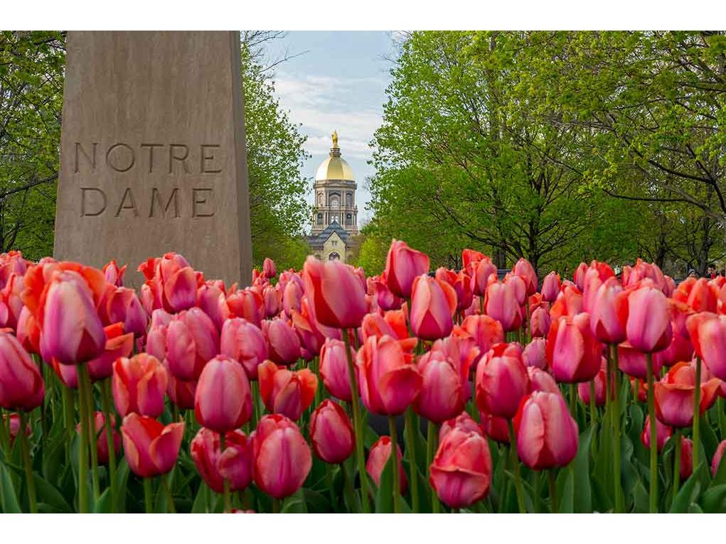 Barbara Johnston/University of Notre Dame