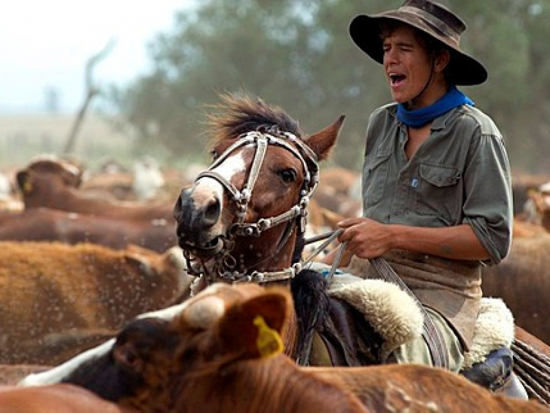 Gauchos work with cattle at Estancia Ibera, Esteros del Ibera, Corrientes Province, Argentina