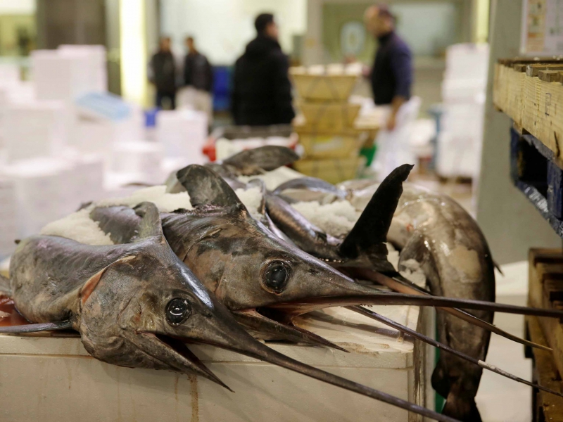 Swordfish are sold at the fish pavilion in Rungis International food market as buyers prepare for the Christmas holiday season in Rungis, south of Paris