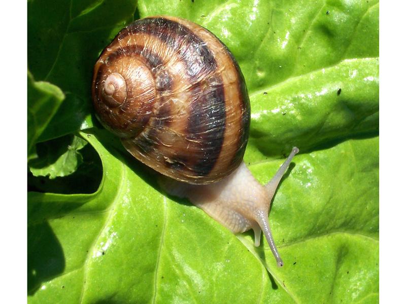 snail-05